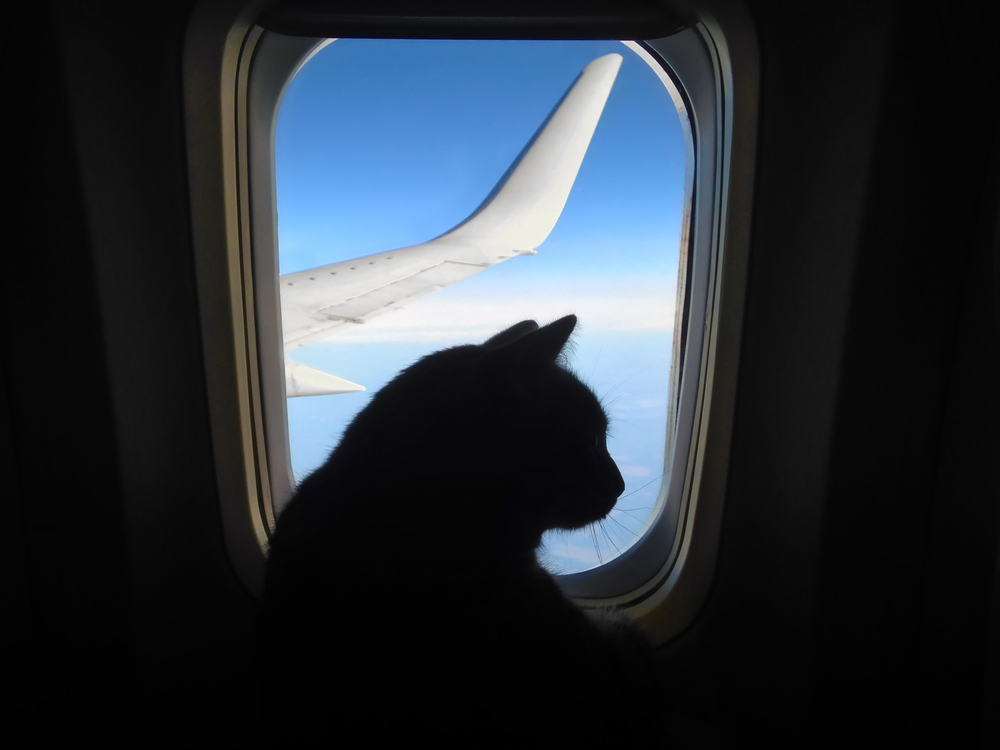 Pets and airplanes: here's what you need to know